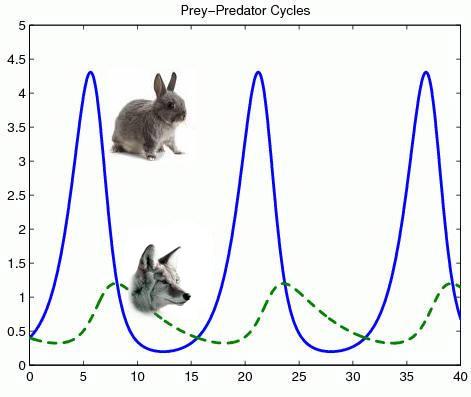relationship between prey and predator